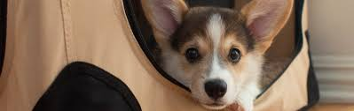 Small House Dogs Dog Crates Houses U0026 Pens Amazon Com
