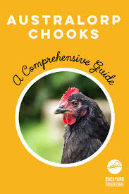 31 best australorp chickens images on pinterest chicken breeds