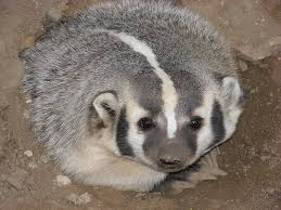 Badger toll free 1 855 787 9453 or 918 367 9060 oklahoma