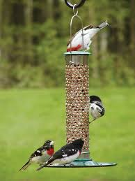 how to stop bird seed from growing on your lawn