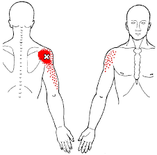 Front Of The Shoulder - deltoid location actions and trigger points ground up