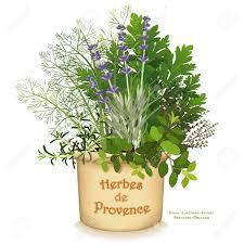 origan en cuisine herbes de provence planteur de jardin mélange classique d herbes