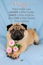 top 25 best pug quotes ideas on pinterest pug pugs and pug puppies