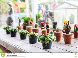 small different types of cactus plants in a row on wooden table