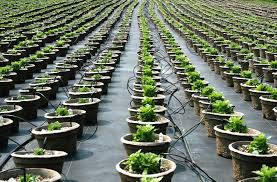 plant and tree nursery to buy plants and pots on the sunshine