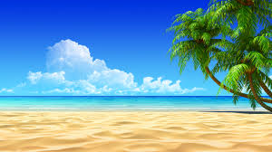 Palm Tree Wallpaper Image For Tropical Beaches With Palm Trees Wallpapers Desktop