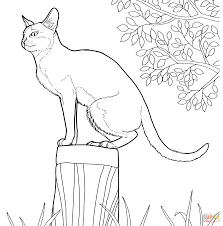 singapura cat coloring page free printable coloring pages