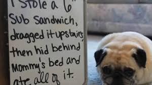 Dog Shaming Meme - dog shaming version 4 naughty dogs with signs bad doggies