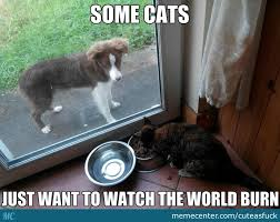 Dog Food Meme - why doesn t the guy with the camera do something those are dog food