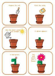 ideas about preschool plant life cycle printables bridal catalog