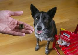 How to Give Your Dog a Pill in 6 Easy Steps