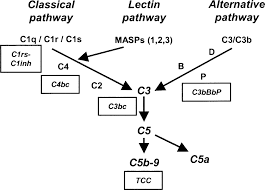 inhibition of c5a induced inflammation with preserved c5b 9
