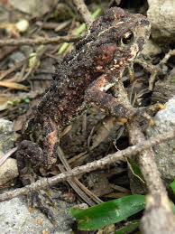 native plants of idaho list of amphibians and reptiles of idaho wikipedia