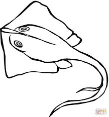 stingray coloring page free printable coloring pages