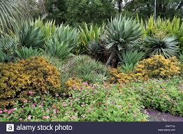 australian native garden plants group of desert plants like agave aloe vera native gymea lily