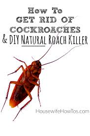 how to get rid of cockroaches and diy roach killer