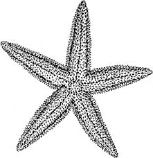 drawing of a starfish star fish how to draw a fish starfish easy
