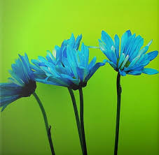 Lime Green Flowers - 237 best color turquoise u0026 lime images on pinterest blue green