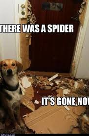 I Saw A Spider Meme - there was a spider iscute com