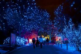 Zoo Lights Preview At Denver Zoo Cruisin 1430 Am