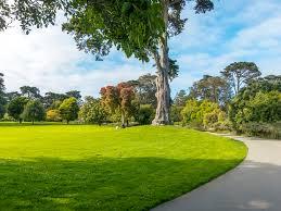 perennial ryegrass a lawn contender