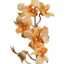 dendrobium orchids buy wholesale bulk dendrobium orchids flower for weddings