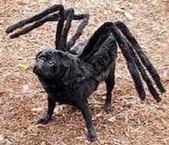 Crazy Halloween Costume 25 Dog Spider Costume Ideas Spider Dog