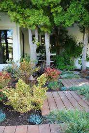 california native drought tolerant plants 118 best ca friendly gardening landscapes by roger u0027s gardens