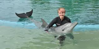 dolphin and seal experiences dolphin marine magic