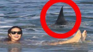 when sharks attack multiple real shark attacks caught on camera