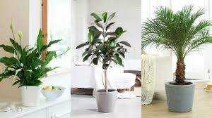 best 10 air purifying plants with nasa ratings youtube