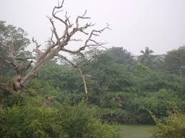 a leafless tree poem by kumarmani mahakul poem