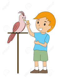 awesome empty nest house plans 7 2649524 boy with pet parrot
