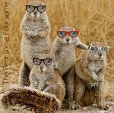 Squirrel Nuts Meme - monday memes squirrels nepa blogcon
