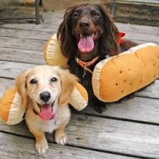 Halloween Costumes Wiener Dogs 21 Wiener Dogs U003c3 Images Weenie Dogs Animals