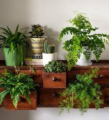 plants at home my interview for house interiors the perfect house plants