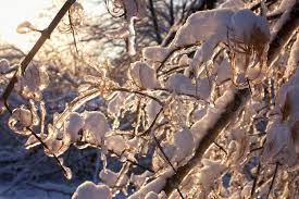 tree branches covered with icicles in which glares the sunlight
