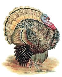 400 best vintage thanksgiving images images on vintage