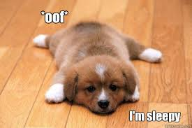 Meme Sleepy - oof i m sleepy tired puppy quickmeme