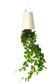 manly up side down decorative plant style then pot hang on house