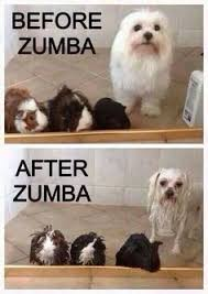 Funny Zumba Memes - 3423 best we love zumba memes images on pinterest zumba quotes