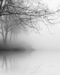 black and white photography trees fog landscape nature winter