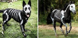 pet owners use face paint to turn their animals into creepy
