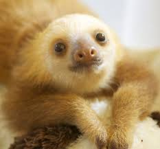oh so baby sloths birds and blooms