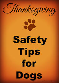 safety tips for thanksgiving thanksgiving food good for dogs bootsforcheaper com