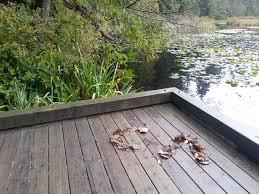 fsog filming beaver lake in stanley park part 3 update u2013 50