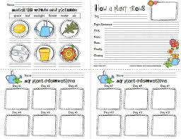 new 908 first grade science worksheets about plants firstgrade