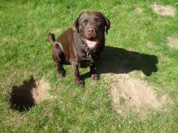 how to stop a dog from digging holes prevent dogs from digging
