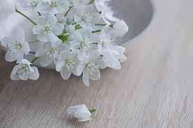 white flower free photo flower flowers white free image on pixabay 1307354