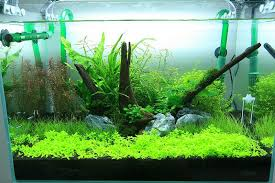 Substrate Aquascape My First 2ft Aquascape Comments Please